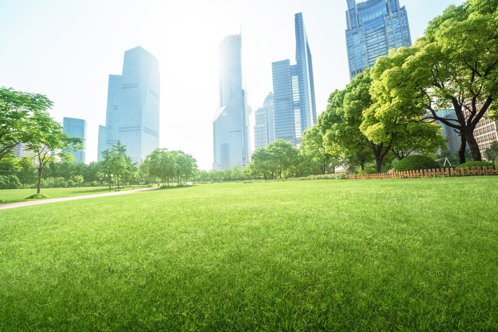 Rethinking the future of cities: How trees are revolutionizing cities around the world